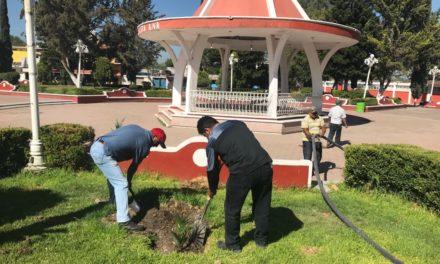 Administración Municipal de Tula continua realizando Reforestación