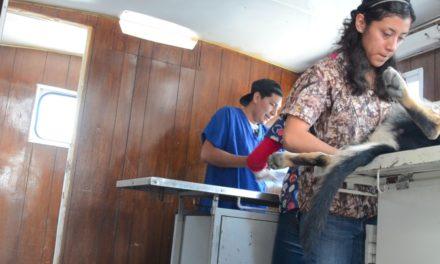Se han registrado un total de 681 esterilizaciones en caninos y felinos en Tepeji del Río.