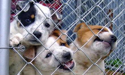 Sanidad y Slaud municipal de Tepeji atiende un mayor número de reportes por caninos abandonados.